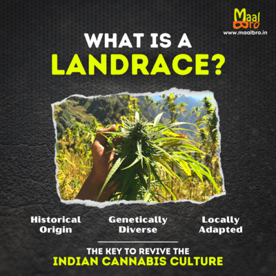 what is a landrace india