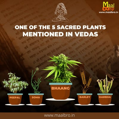 bhang one of the five sacred plants mentioned in vedas